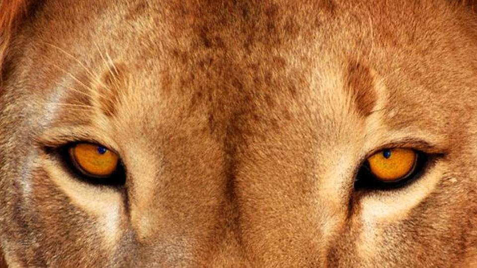Jak to vidí zvíře